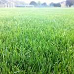 Rasenfäche im Rhinelanderstadion nach der Intensivpflege